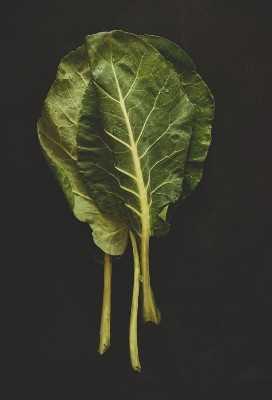 Collard hojas verdes para hacer saludable falafel casero.