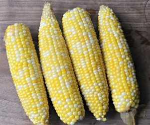 Maíz listo para convertirse en maíz mexicano de la calle