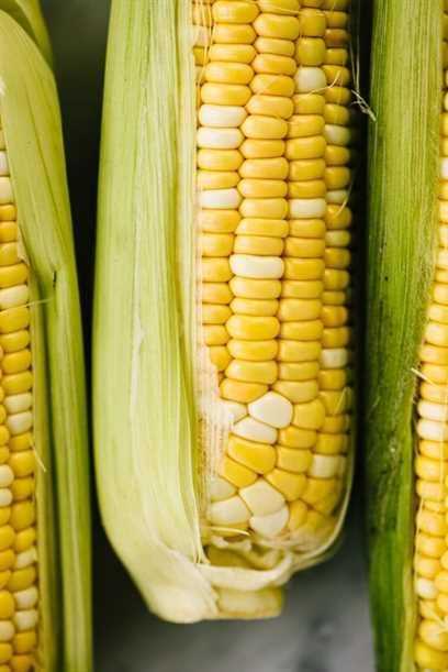 Tres mazorcas de maíz dulce bicolor parcialmente silenciado.